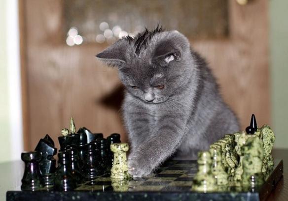 kediler hafıza bilir mi